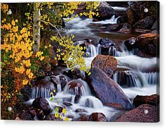 Acrylic Print featuring the photograph Autumn Zen by John De Bord