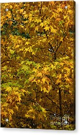 Autumnal Leaves And Trees 2 Acrylic Print