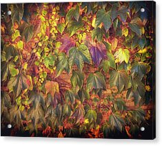 Autumnal Leaves Acrylic Print