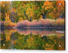 Autumn's Color Palette  Acrylic Print by Darren White