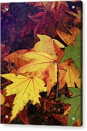 Autumns Colors Acrylic Print by Robert Ball