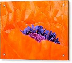 Autumn's Glory Acrylic Print by Lucia Del
