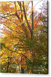 Acrylic Print featuring the photograph Autumn's Gold - Photograph by Jackie Mueller-Jones