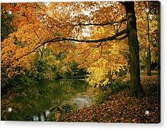 Acrylic Print featuring the photograph Autumn's Golden Tones by Jessica Jenney