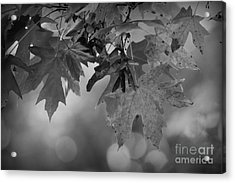 Autumn's Mystery Acrylic Print