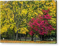 Autumn's Peak Acrylic Print by Jeremy Lavender Photography