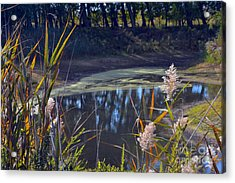 Autumn's Tranquility Acrylic Print by Robyn King