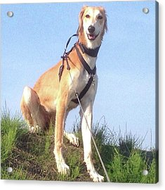Ava-grace, Princess Of Arabia  #saluki Acrylic Print