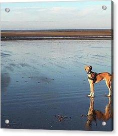 Ava's Last Walk On Brancaster Beach Acrylic Print by John Edwards