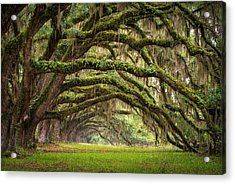 Avenue Of Oaks - Charleston Sc Plantation Live Oak Trees Forest Landscape Acrylic Print