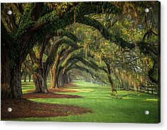 Avenue Of Oaks Acrylic Print