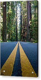 Avenue Of The Giants Acrylic Print