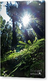 Acrylic Print featuring the photograph Avenue Of The Giants Redwood Trees California Dsc5517 by Wingsdomain Art and Photography