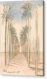Avenue Of Trees Acrylic Print by Edward Lear
