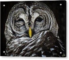 Avery's Owls, No. 11 Acrylic Print