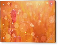 Awakening In A Wonder World - Snake's Head/ Chess Flower  Acrylic Print