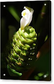 Acrylic Print featuring the photograph Awapuhi Plant by Debbie Karnes