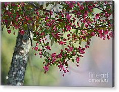 Acrylic Print featuring the photograph Awe... Spring by Brenda Bostic