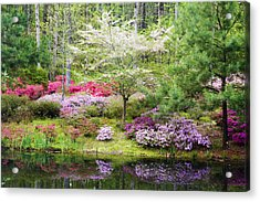 Azalea Heaven Acrylic Print by Eggers Photography