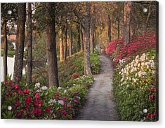 Azalea Hill Path Acrylic Print