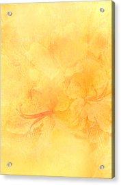 Azalea Impressions Acrylic Print