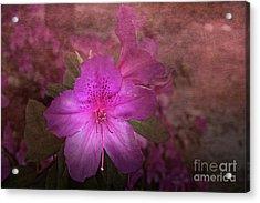 Azalea Acrylic Print by Judy Hall-Folde