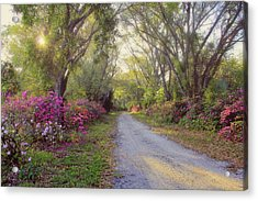 Azalea Lane By H H Photography Of Florida Acrylic Print by HH Photography of Florida