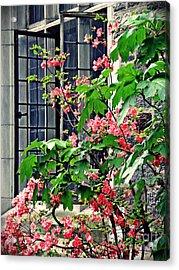 Azaleas At The Window   Acrylic Print by Sarah Loft