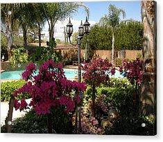 Azaleas In Bloom Acrylic Print by Diane Ferguson