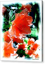Acrylic Print featuring the painting Azaleas In The Spring by Patricia Griffin Brett