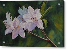 Azaleas Acrylic Print by Judy Mercer