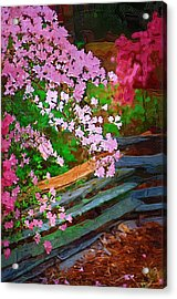 Acrylic Print featuring the photograph Azaleas Over The Fence by Donna Bentley