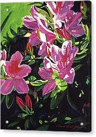 Azaleas With Dew Drop Acrylic Print