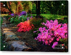 Azelea Row At The Azalea Festival Acrylic Print