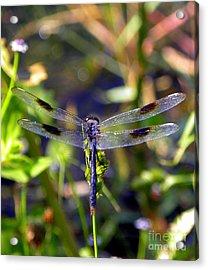 Azure Dragonfly Acrylic Print by Terri Mills