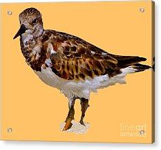 Acrylic Print featuring the digital art B Bird by Francesca Mackenney