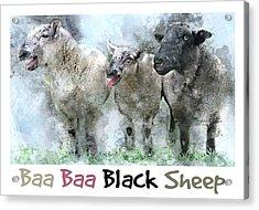 Baa, Baa, Black Sheep - Farm Animal Watercolor Acrylic Print by Rayanda Arts