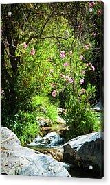 Babbling Brook Acrylic Print
