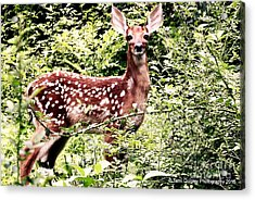 Babe In The Woods Acrylic Print