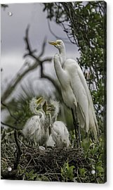 Babies In The Nest Acrylic Print