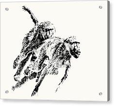 Baboon Chase Action Acrylic Print