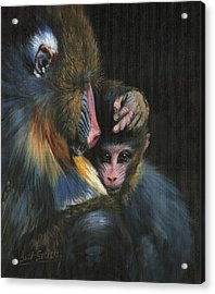 Baboon Mother And Baby Acrylic Print by David Stribbling