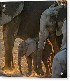 Baby And Siblings Acrylic Print