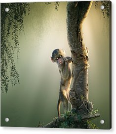 Baby Baboon In Tree Acrylic Print by Johan Swanepoel