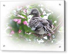 Baby Bird In Crape Myrtle Tree Acrylic Print by Linda Phelps