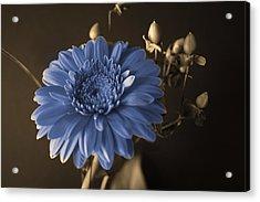 Baby Blue Gerbera Acrylic Print by Nancy TeWinkel Lauren