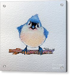 Baby Bluebird Acrylic Print