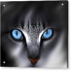 Acrylic Print featuring the photograph Baby Blues by Cecil Fuselier