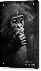Acrylic Print featuring the photograph Baby Bonobo by Helga Koehrer-Wagner