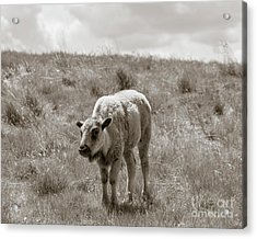 Acrylic Print featuring the photograph Baby Buffalo In Field With Sky by Rebecca Margraf